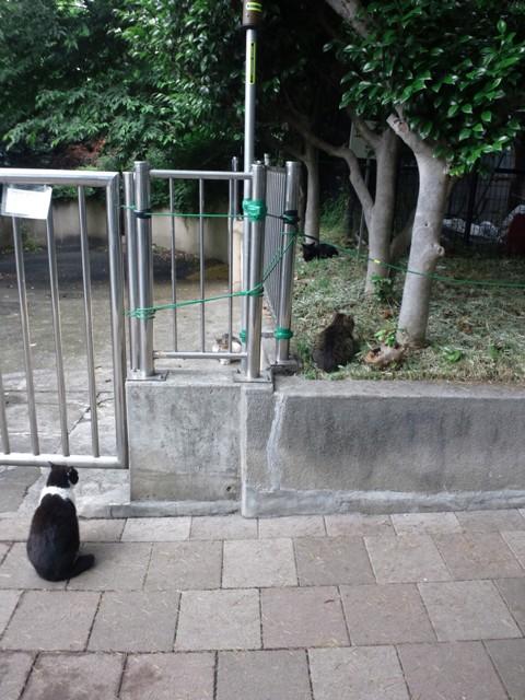 近隣地域(西戸山公園)の地域猫達